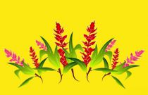 Paréos fleurs Opui jaune